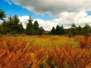 Cranberry Glades Pocahontas County