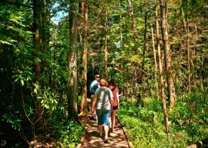 Hiking in Cranberry Glades