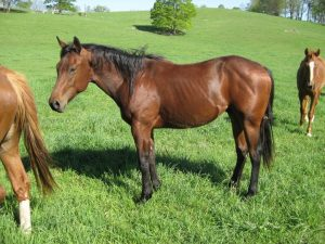 watoga horse rides