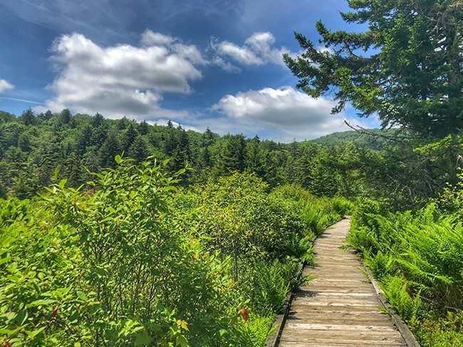 cranberry glades boardwalk
